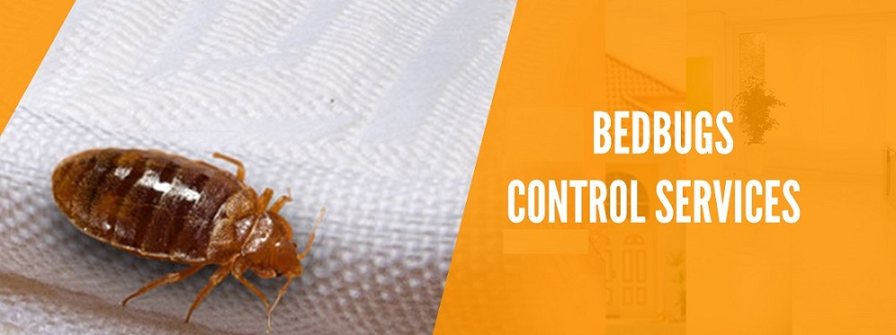 Bed Bugs Control Services Awesomepest