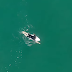 Tubarão passa a poucos centímetros de surfista; assista ao vídeo