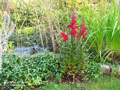 rośliny wokół jeziorka