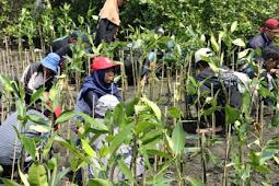 Upaya Pelestarian Hutan Mangrove