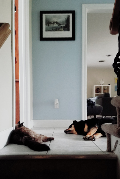 image of Matilda the Fuzzy Sealpoint Cat and Zelda the Black and Tan Mutt lying at the top of the stairs