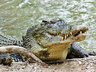 قصة التمساح الجشع الطماع.