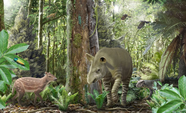 Small horses got smaller, big tapirs got bigger 47 million years ago