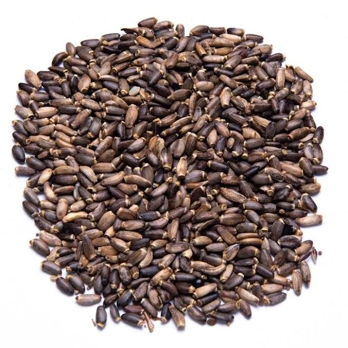 Γαϊδουράγκαθο – Onopordum Αcanthium 100γρ.
