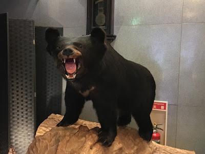 船山温泉 熊の剥製