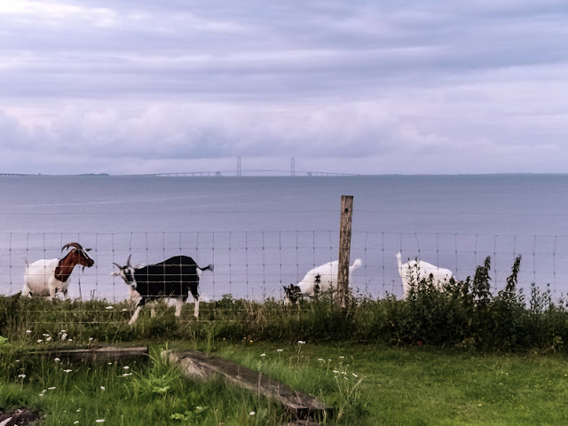Vaste bewoners van Tårup Strand Camping