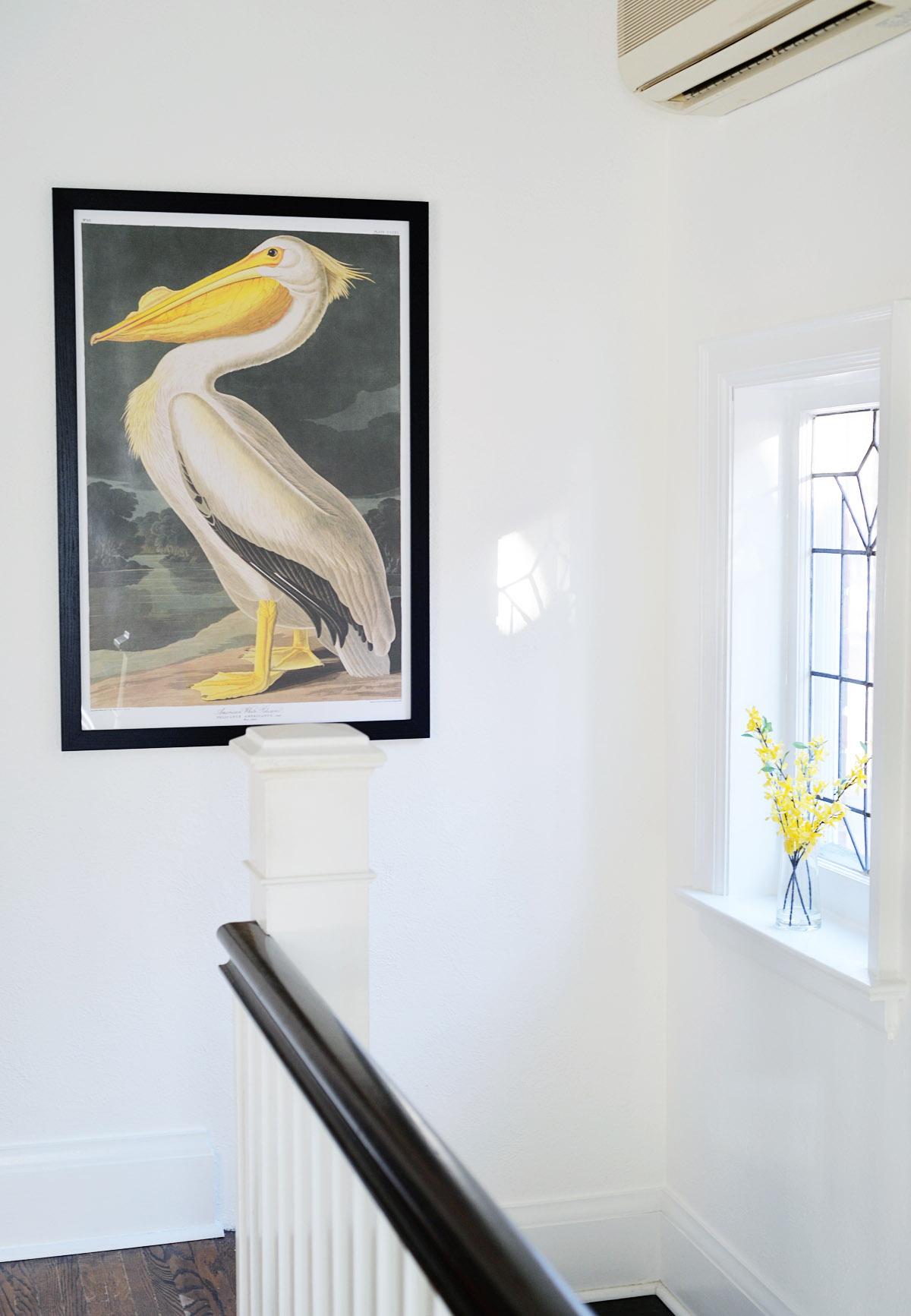 audubon pelican print, audubon printable art