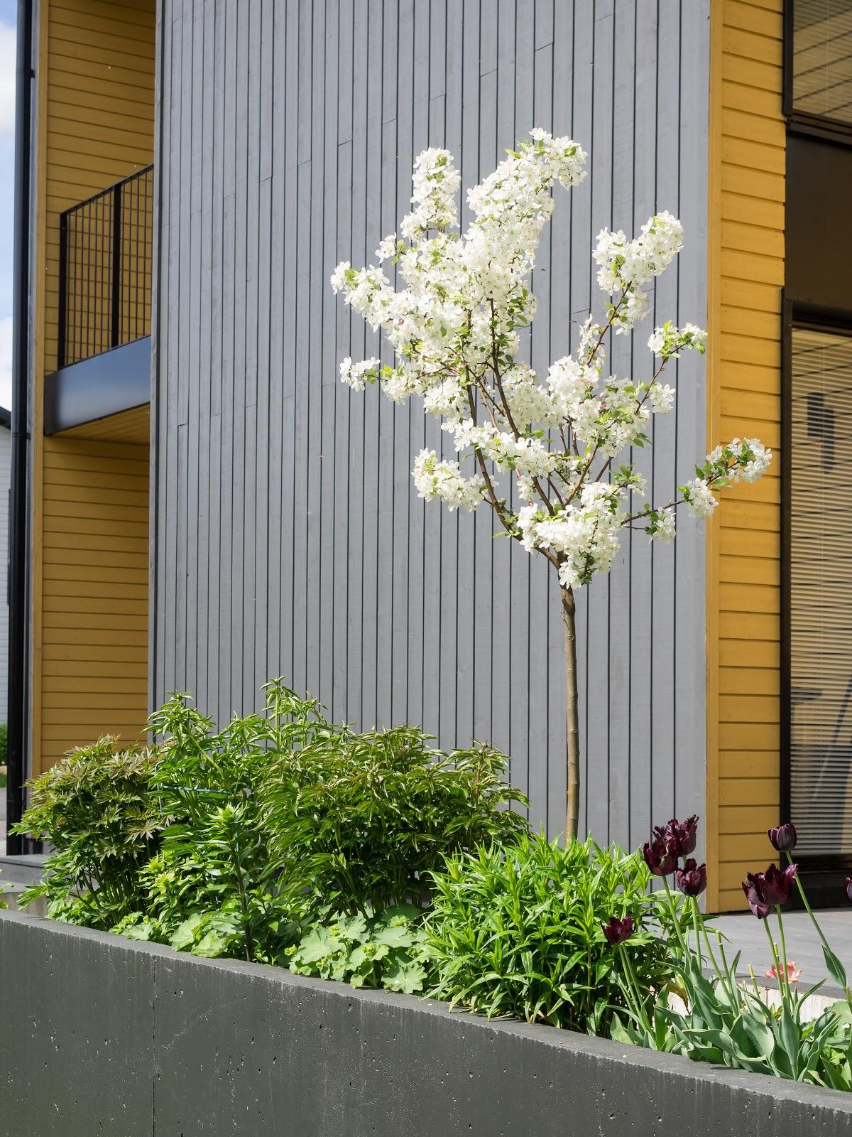 Talostakoti puutarha