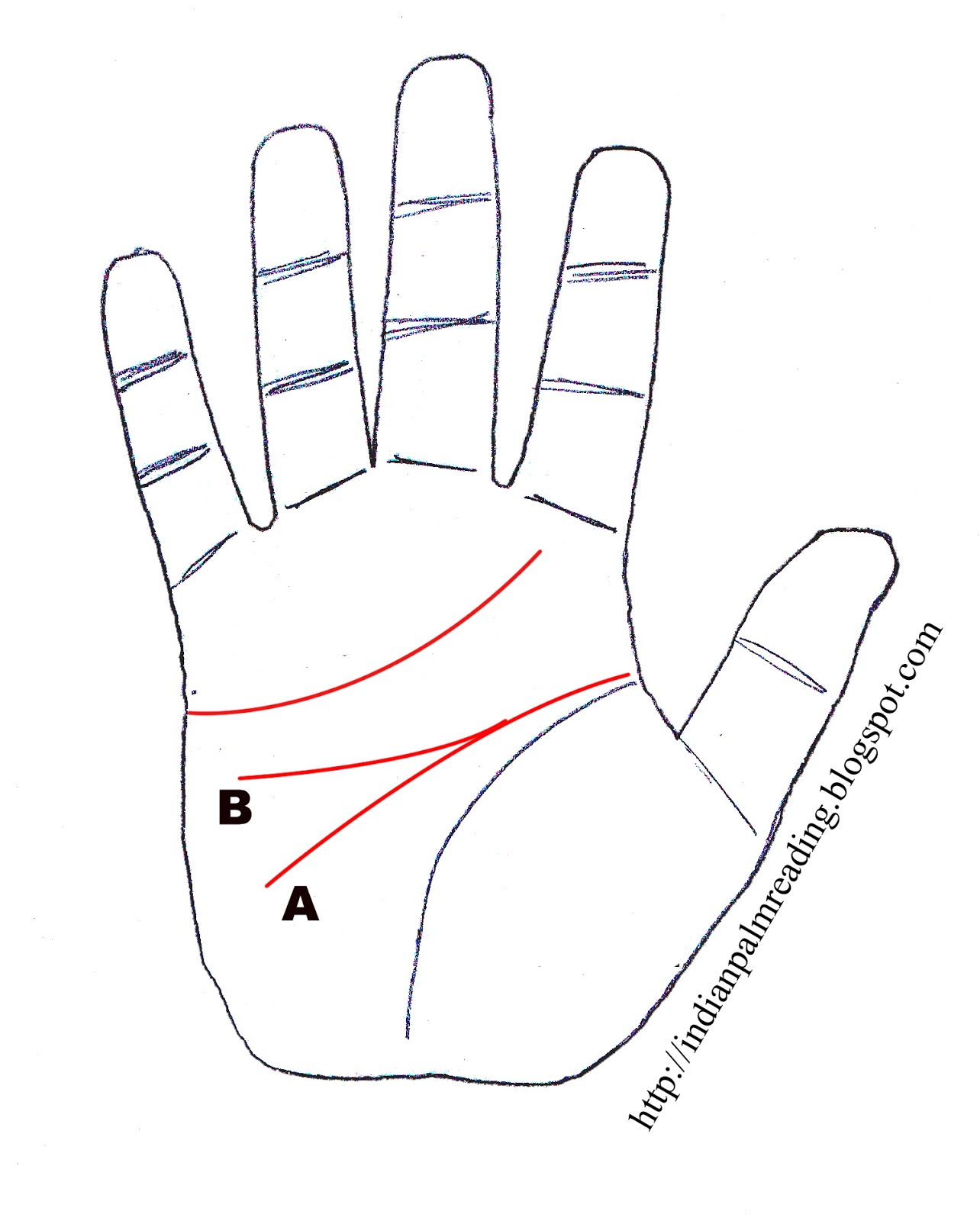 Sign Of Sensitive Or Careless Person In Palmistry