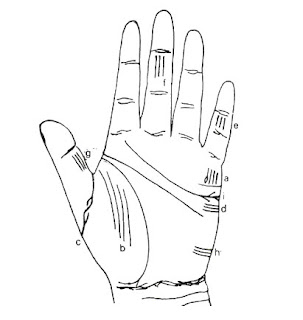 how many childrens in palmistry