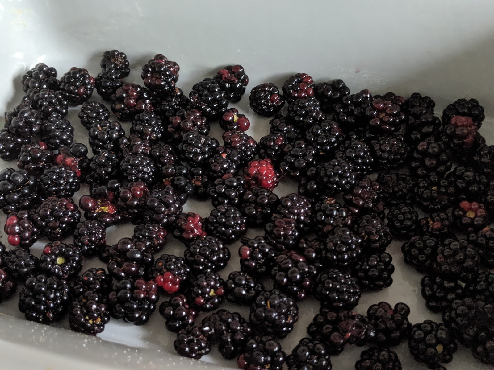 Where to go Blackberry Picking in North East England & Easy Blackberry Crumble Recipe for Kids