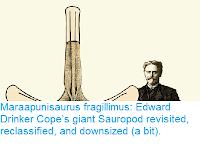 http://sciencythoughts.blogspot.com/2018/10/maraapunisaurus-fragillimus-edward.html