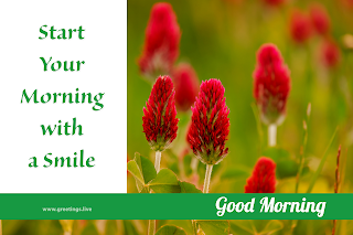 start your morning with smile! Good morning message with red flowers