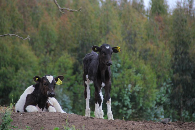 Implementan plan de capacitación dirigido a la Agricultura Familiar Campesina