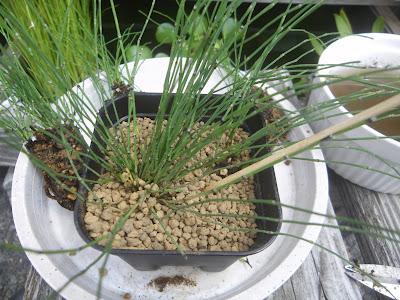 竹串 用土