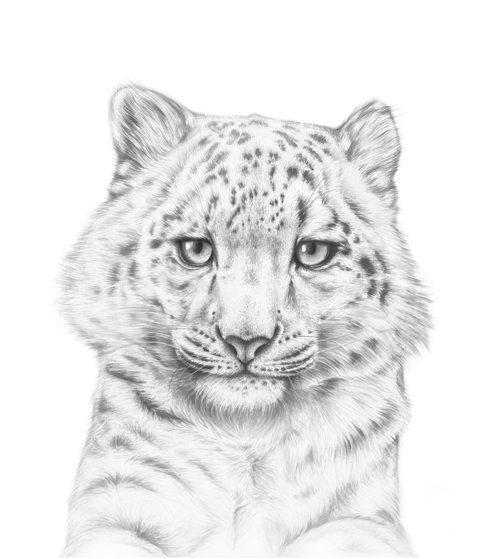 03-Snow-Leopard-Jaimee-Paul-Mixed-Media-Animal-Drawings-and-Paintings-www-designstack-co