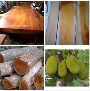 kekurangan dan kelebihan kayu nangka untuk furniture