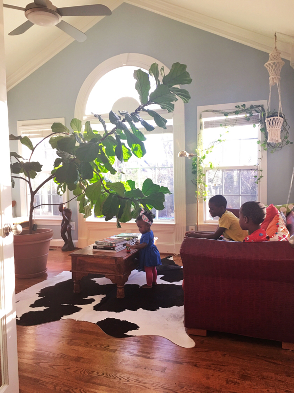 Sunroom with fiddle leaf fig-design addict mom