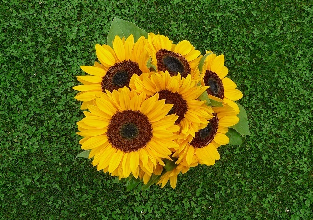 sunflowers bouquet on the ground