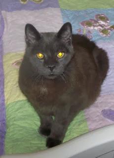 Diabetic Cat Chubby Has Left Us