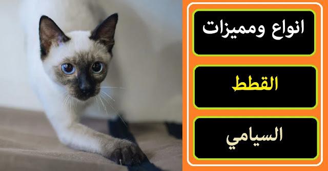 """""""القطط السيامي"""" """"القطط السيامي البيضاء"""" """"القطط السيامي الصغيرة"""" """"القطط السيامي واسعارها"""" """"القطط السيامية"""" """"القطط السيامية الصغيرة"""" """"القطط السيامية ويكيبيديا"""" """"القطط السيامي في مصر"""" """"الوان القطط السيامي"""" """"قطط سيامي olx"""" """"القطط الفطسانة"""" """"قطط السيامي البيضاء"""" """"القطط الشيرازى البيضاء الصغيرة"""" """"القط السيامي الابيض"""" """"قطط السيامي الصغيرة"""" """"القطط الشيرازى الصغيرة"""" """"القطط الشيرازى الصغيرة واسعارها"""" """"اسعار القطط السيامى الصغيرة فى مصر"""" """"ماذا تأكل القطط السيامي الصغيرة"""" """"القطط الشيرازى واسعارها"""" """"اشكال القطط السيامى واسعارها"""" """"انواع القطط السيامى واسعارها"""" """"سعر القطط السيامي"""" """"سعر القط السيامي في مصر"""" """"اسعار القطط السيامي في مصر"""" """"سعر القط السيامي"""" """"القطط الشيرازى اسعار"""" """"سعر القطط السيامي في مصر"""" """"القط السيامي في الحلم"""" """"القطط السيامية للبيع"""" """"قطط السيامية"""" """"انواع القطط السيامية"""" """"تزاوج القطط السيامية"""" """"صفات القطط السيامية"""" """"الوان القطط السيامية"""" """"القطط الفاطسة"""" """"القطط صغيرة"""" """"قطط السيامي ويكيبيديا"""" """"القط الشيرازي ويكيبيديا"""" """"اسعار القطط السيامى في مصر 2019"""" """"أسعار القطط السيامي في مصر 2020"""" """"سعر القطط السيامي في مصر 2021"""" """"اسعار القطط الشيرازى في مصر"""" """"أسعار القطط الشيرازى في مصر 2019"""""""