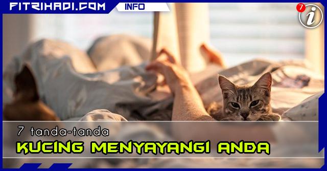 (Info) 7 Tanda Kucing Menyayangi Anda