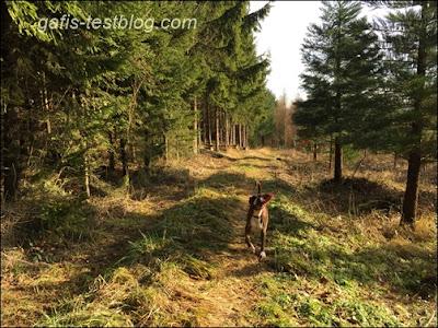 Amy im Wald