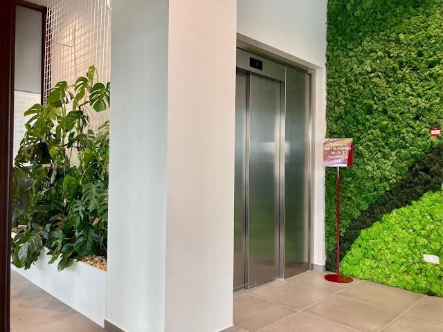 kamerplanten op gaas of tegen wandplantenwand en moswand met rendiermos voor kantoor bedrijf handelszaak horeca prijzen op aanvraag