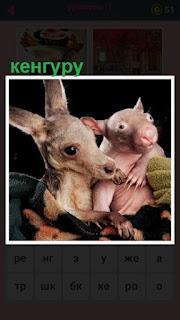небольшое кенгуру держит своего детеныша