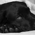 Έτσι θα σώσετε ένα σκυλί που έχει φάει φόλα