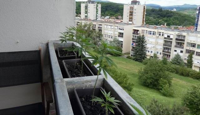 Kannabiszt termesztett a panel erkélyen egy salgótarjáni férfi
