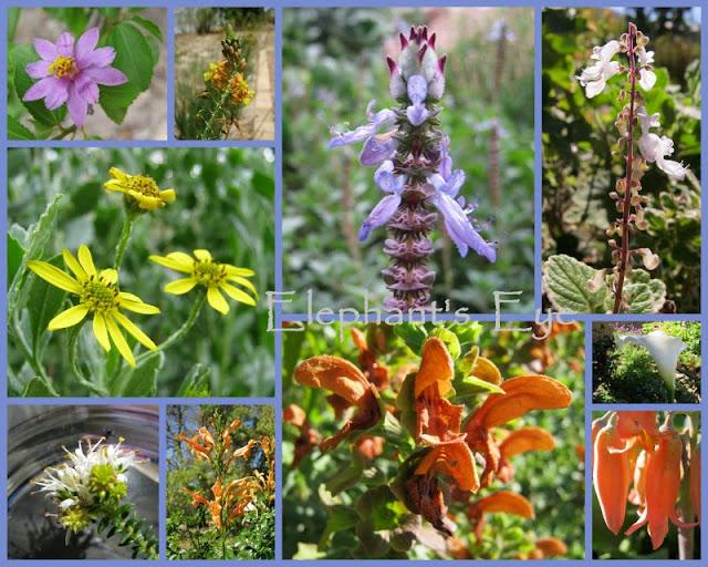 Dozen for Diana flowers in 2013