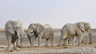 Best story. Elephant. Bacchon ki kahani.