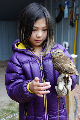 Alberta Birds of Prey Nature Centre, Coaldale