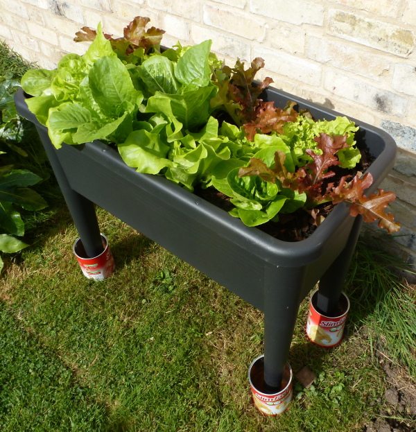 Elho plastic grow table filled with different varieties of lettuce salad leaves all in perfect condition