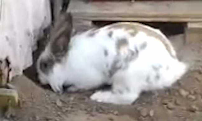 Meet Chasky The Bunny And Pelu The Cat, Two Inseparable Friends