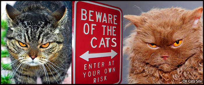 Photoshopped Cat picture •  BEWARE OT THE CATS • Enter at your own risk