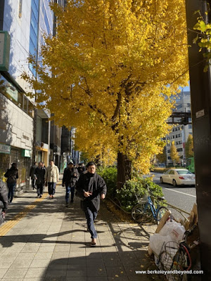 fall color on streets of Tokyo, Japan