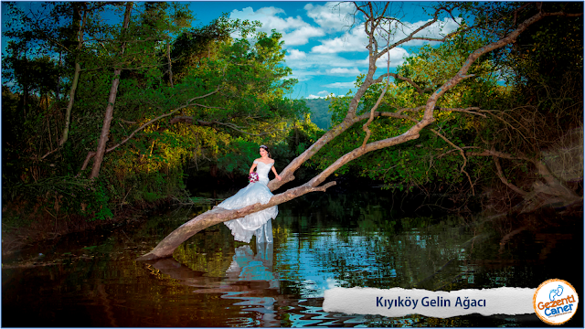Kiyikoy-Gelin-Agaci