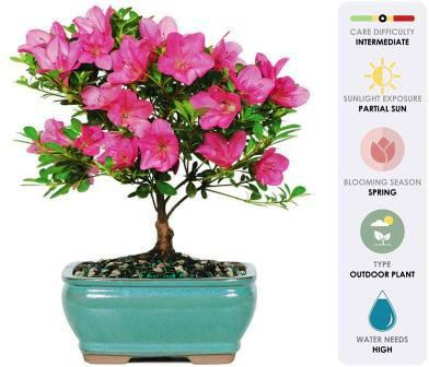 How to grow a bonsai tree from seed & Care of bonsai tree