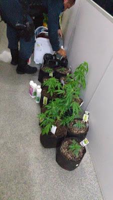 Polícia prende dupla que cultivava e vendia maconha em Aracaju