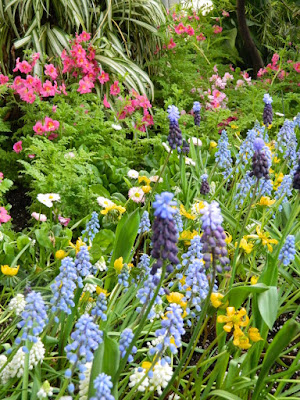 Pale blue grape hyacinths and Schizanthus at the Allan Gardens Conservatory 2018 Spring Flower Show by garden muses-not another Toronto gardening blog
