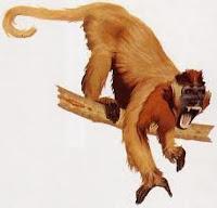 Testo e immagini sulle prime scimmie della preistoria