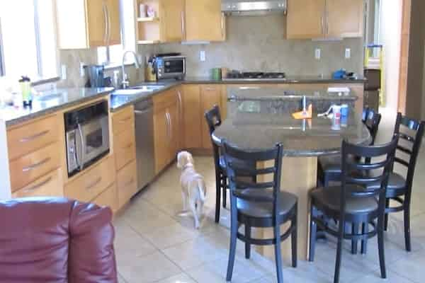 Pet Dog Shows Super Sleuth Abilities Discovering Food