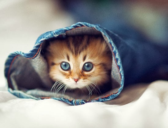 Cute Kucing Paling Comel Di Dunia