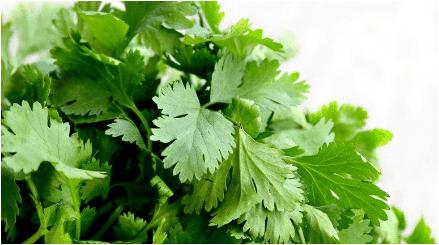 الخضراوات الورقية الخضراء البقدونس