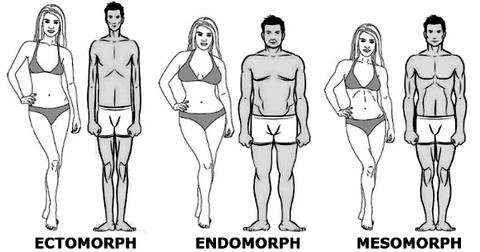 What is my body type : Ecto, Endo or Meso