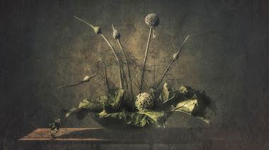 Fotos de flores y frutos premiadas en IGPOTY 14. Naturaleza Muerta