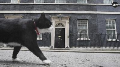 Kucing ini Pensiun Dari Kementerian Luar Negeri Inggris