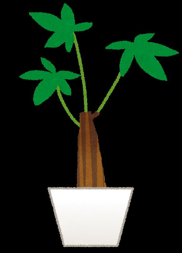パキラのイラスト観葉植物 かわいいフリー素材集 いらすとや